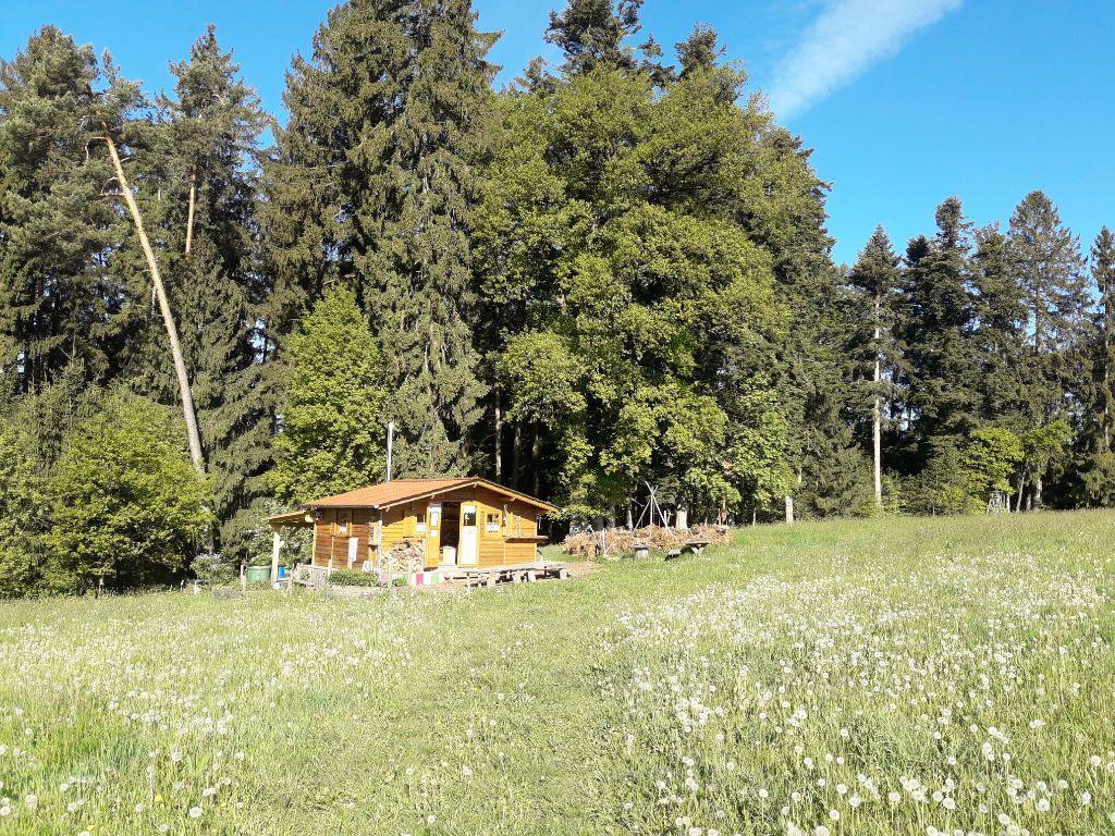 Grossansicht in neuem Fenster: Waldgruppe Schlaue Füchse